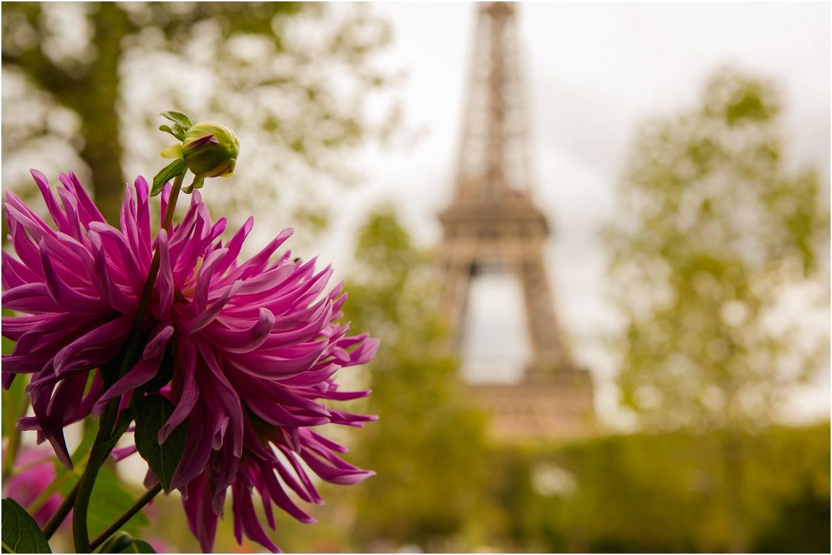 Tour Eiffel Terra Cooper Photography_4248.jpg