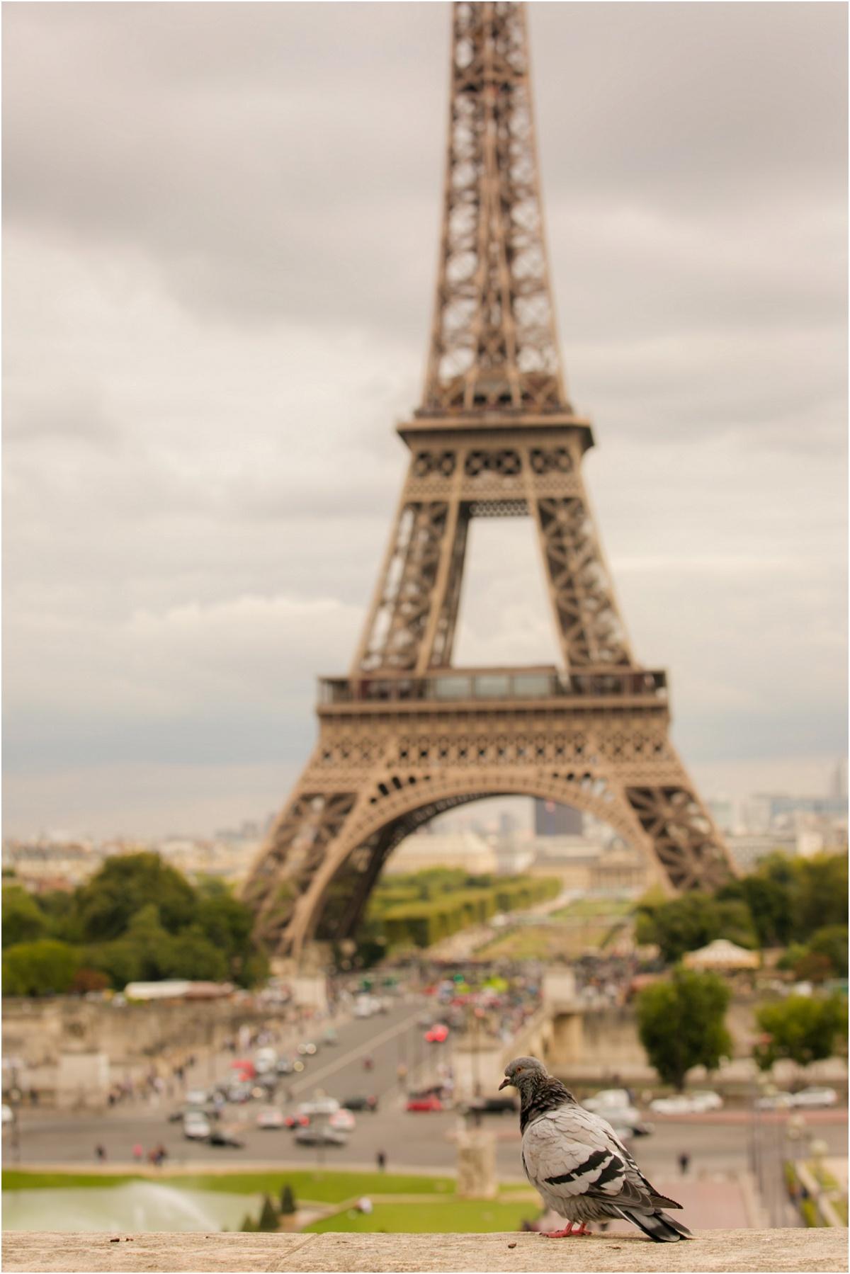 Tour Eiffel Terra Cooper Photography_4253.jpg